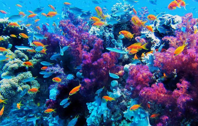 Anilao | Dive Travel Philippines